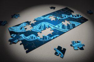 Edition du génome : les TALENs cinq fois plus efficaces que CRISPR sur les ADN denses