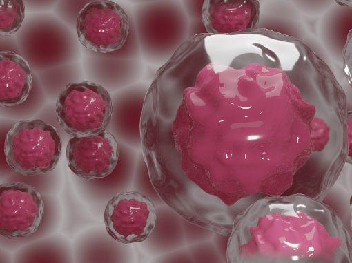 Embryoïdes, blastoïdes, MEUS: des embryons créés pour la recherche