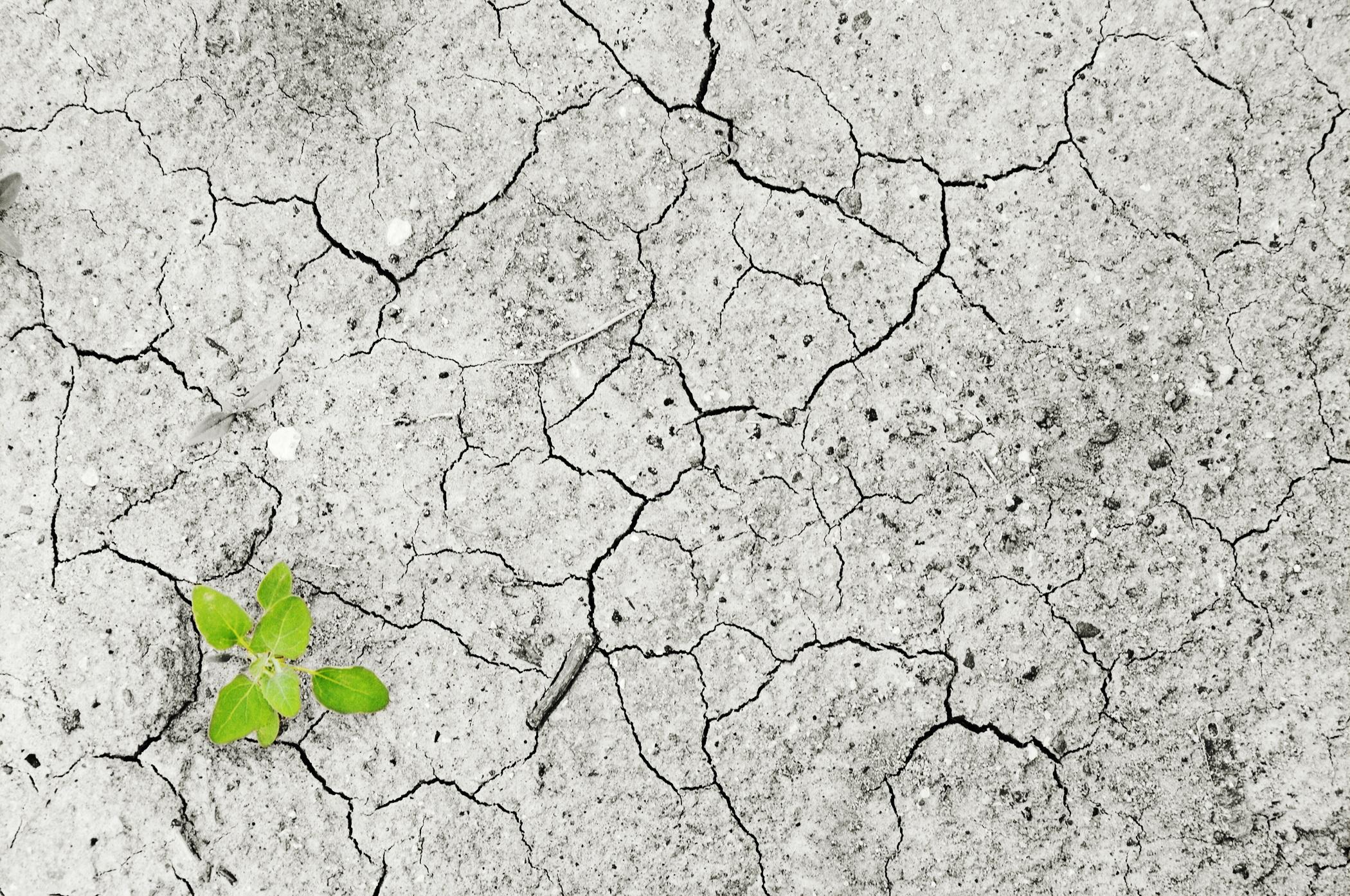 Délit d'« écocide » : l'homme, coupable ou victime ?
