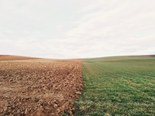 UE: Un cadre à part pour les «nouveaux OGM»?