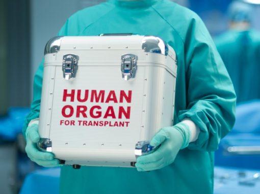Greffe d'organes : des foies conservés et régénérés pendant 7 jours ?
