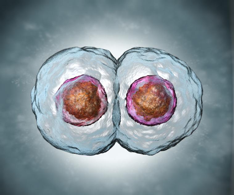 12_Science_Mitose_ADN