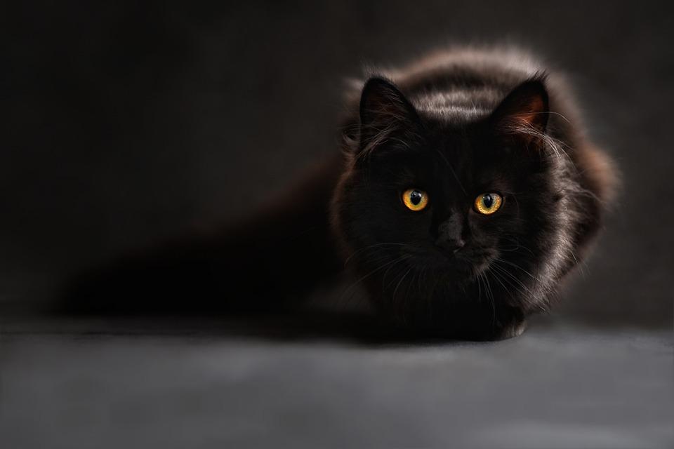 cat-694730_960_720