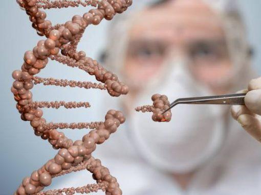 Des ciseaux moléculaires pour cibler l'ARN