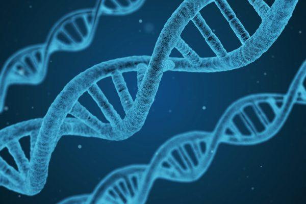 GMO babies: shorter life expectancy?