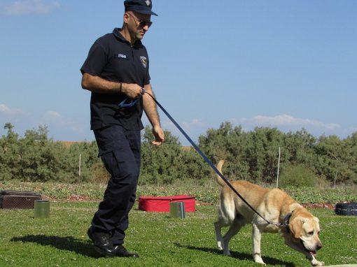 Un chien policier cloné en chine