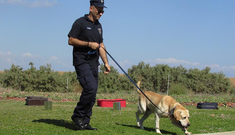 police-dog-1761874_960_720